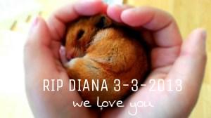RIP Diana