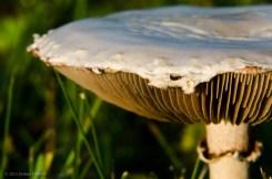 Morning Mushroom
