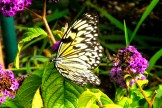 Black Speckled White Butterfly on a Leaf