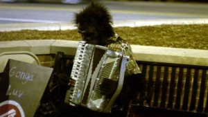 Gorilla playing accordion