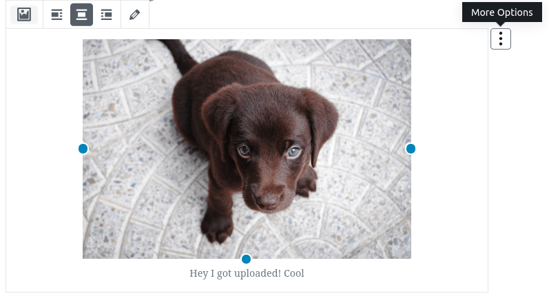 puppy-looking-up-at-camera-gutenberg-block