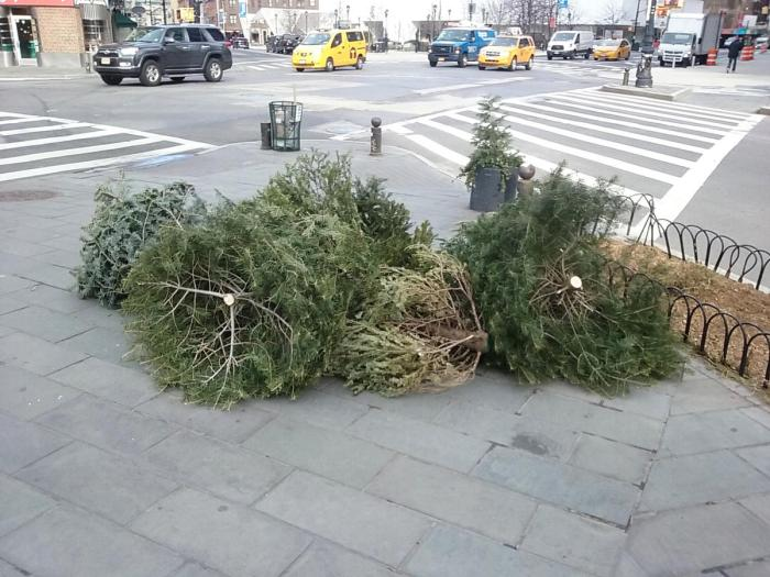December 26, 2017 trees out for disposal