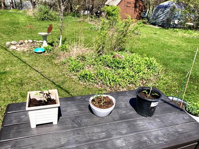Karen Shragg's gardening