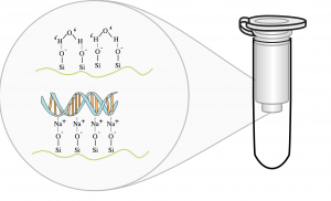Figure 6: A silica filter used in DNA extraction. In a mixture of alcohol and salts, DNA will get caught in the filter. In pure water DNA passes through the filter.