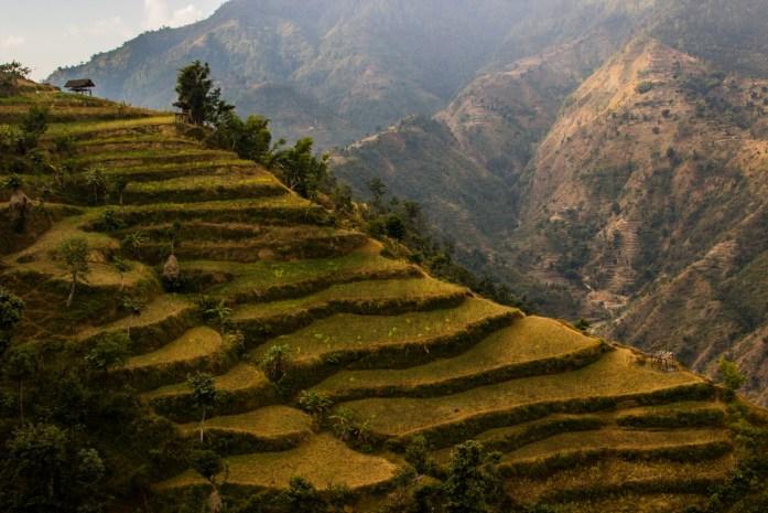 Terraced Fields in Nepal