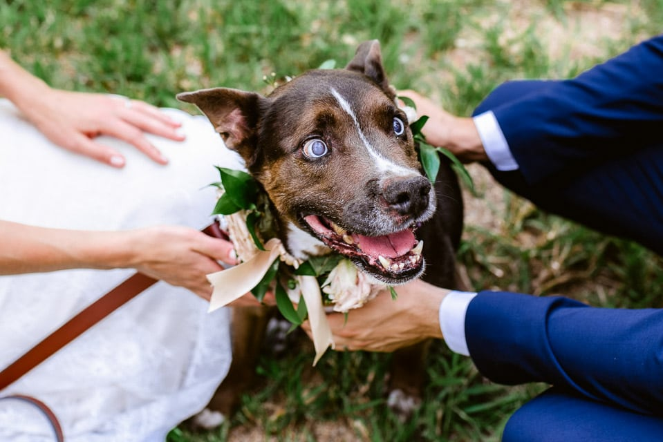 Dog surrounded by couple at their wedding. Puppy wears flower collar for wedding photos. In deciding between an elopement vs wedding do you want to have your dog there? This couple included their dog in the ceremony and the afterparty.