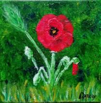 Poppies, 20x20 cm