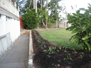 hedge block side
