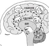 スピリチャルSEXが閃き脳を創る理由