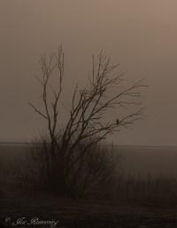 Tree with fog-19