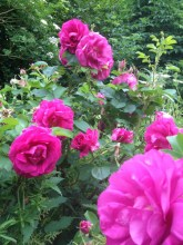 The roses and happy!