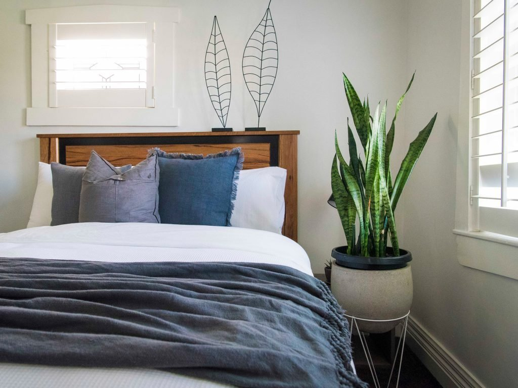 Best Leaf Love The Best Plants To Grow In Your Bedroom With Pictures