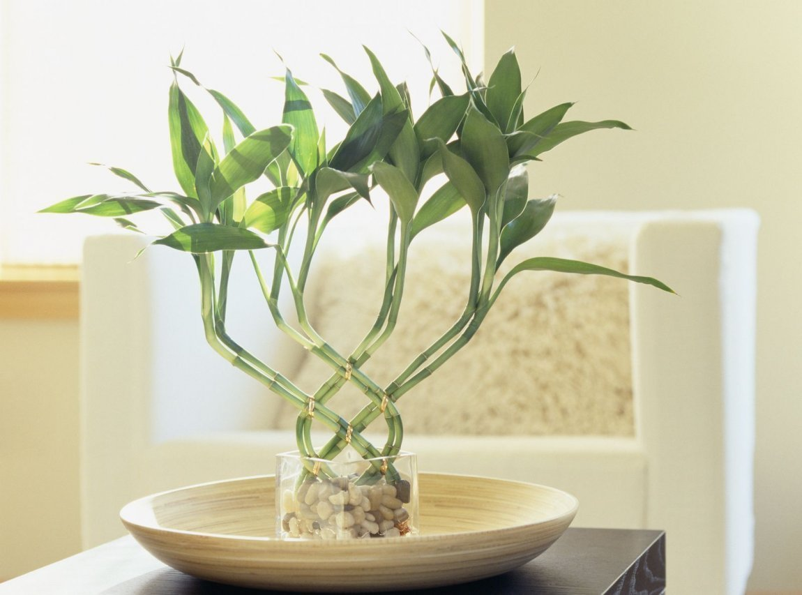 Best 5 Plants To Bring Luck According To Vastu And Fengshui With Pictures