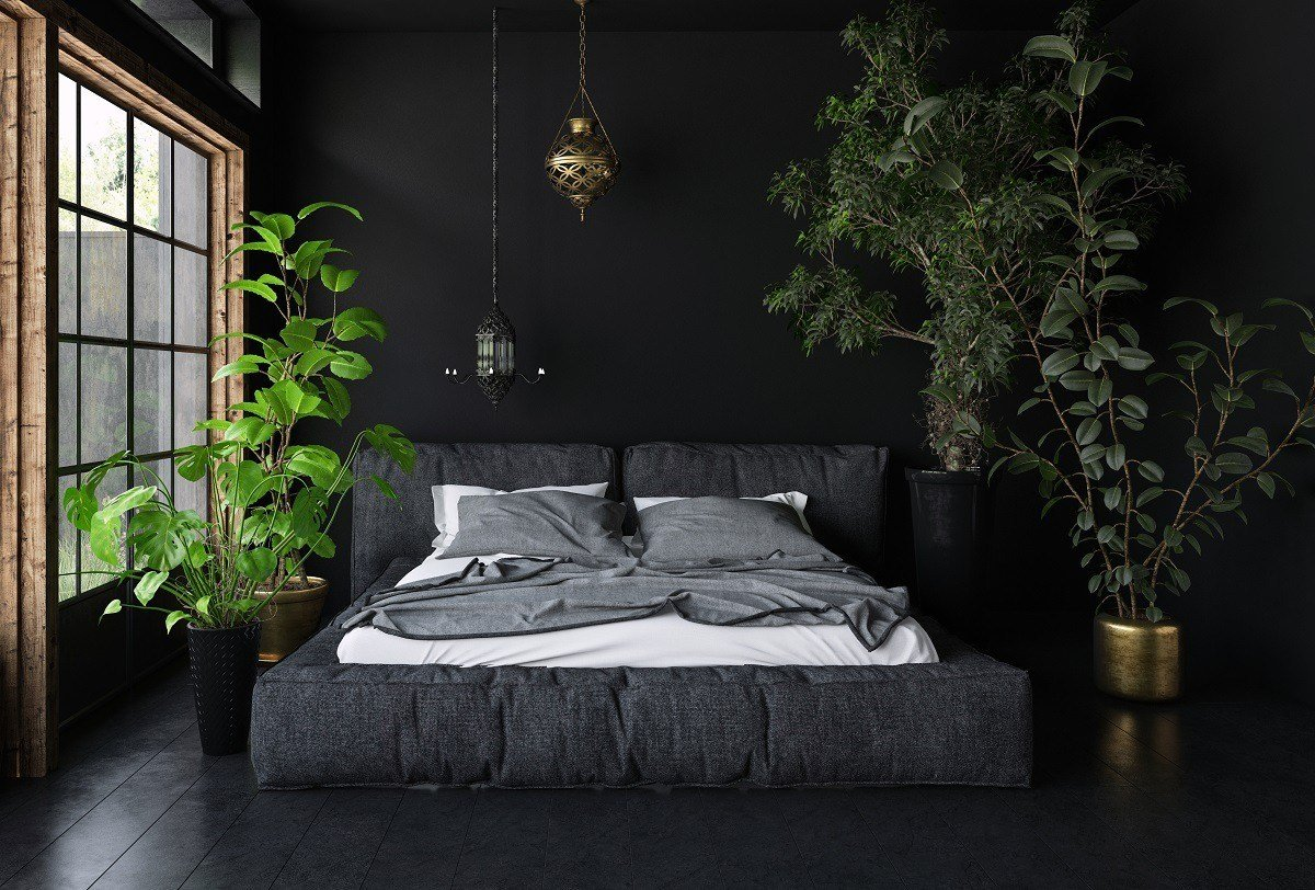 Best 15 Soothing Bedroom Plants To Help You Sleep Earth911 Com With Pictures