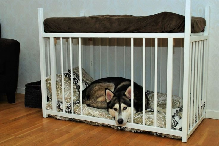 Best 25 Dog Bedroom Ideas On Pinterest Dog Rooms Dog With Pictures