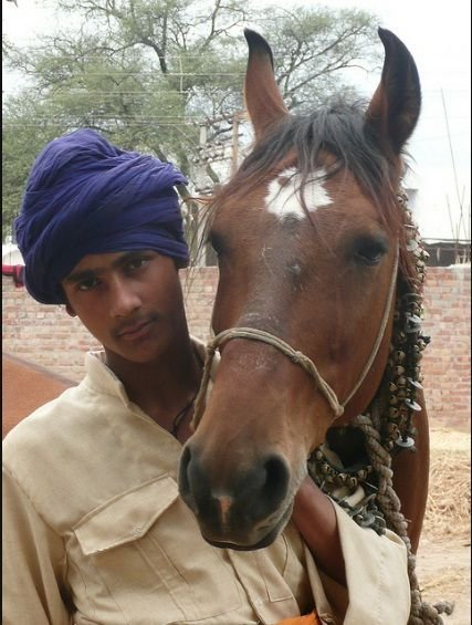 Best Young Nihang Singh With His Horse Photo By Dalbir Singh With Pictures