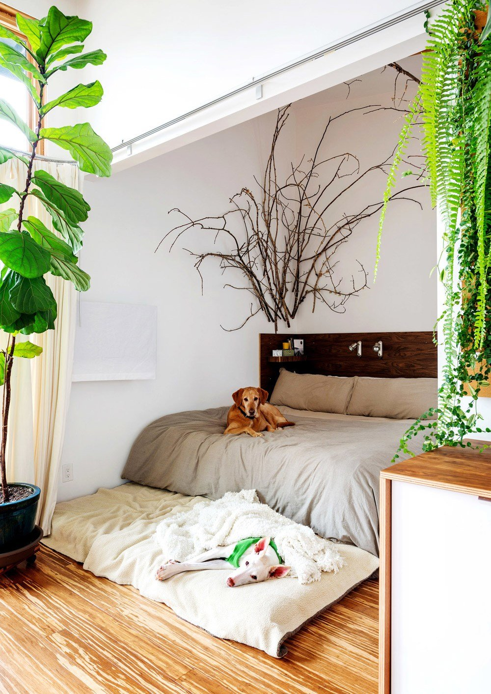 Best Design Highlight Bedrooms Using Live Plants As Decor With Pictures