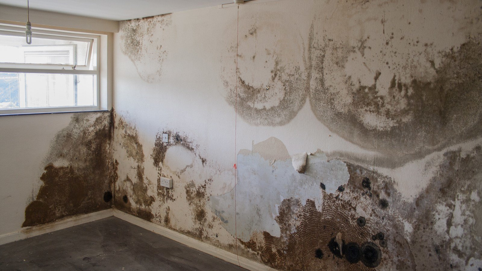 Best Penetrating Damp Rain P*N*Tr*T**N In Walls With Pictures