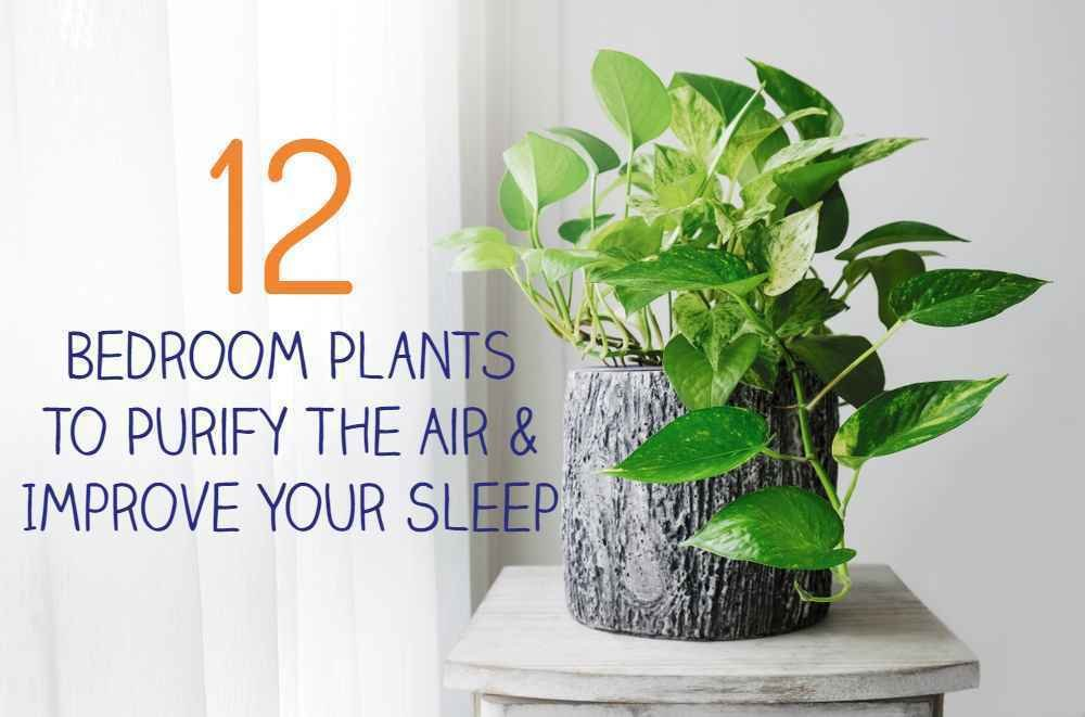 Best 12 Bedroom Plants To Purify The Air Improve Your Sleep With Pictures