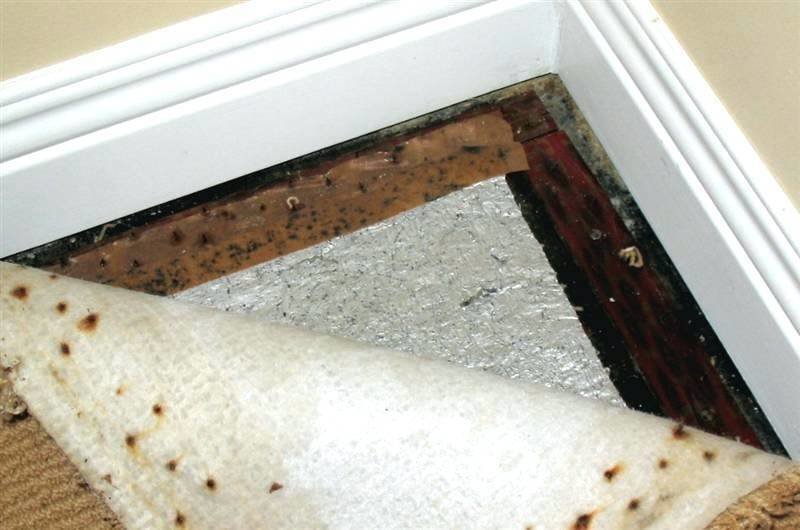 Best Mildew Smell In Bedroom How To Get Rid Of A Musty Smell From Bat Moisture In Musty Smell In With Pictures
