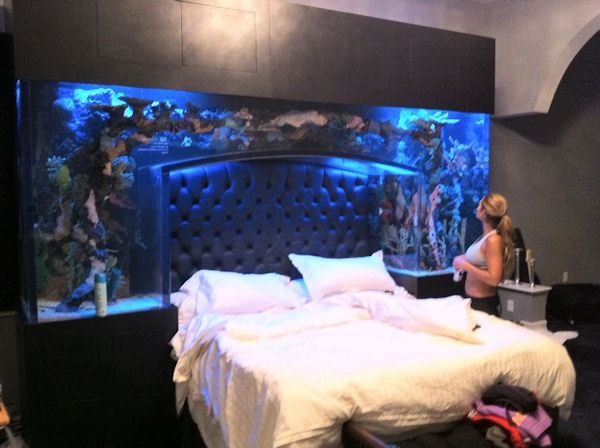 Best Nfl Baller Chad Ochocinco Installs A Fish Tank Headboard With Pictures