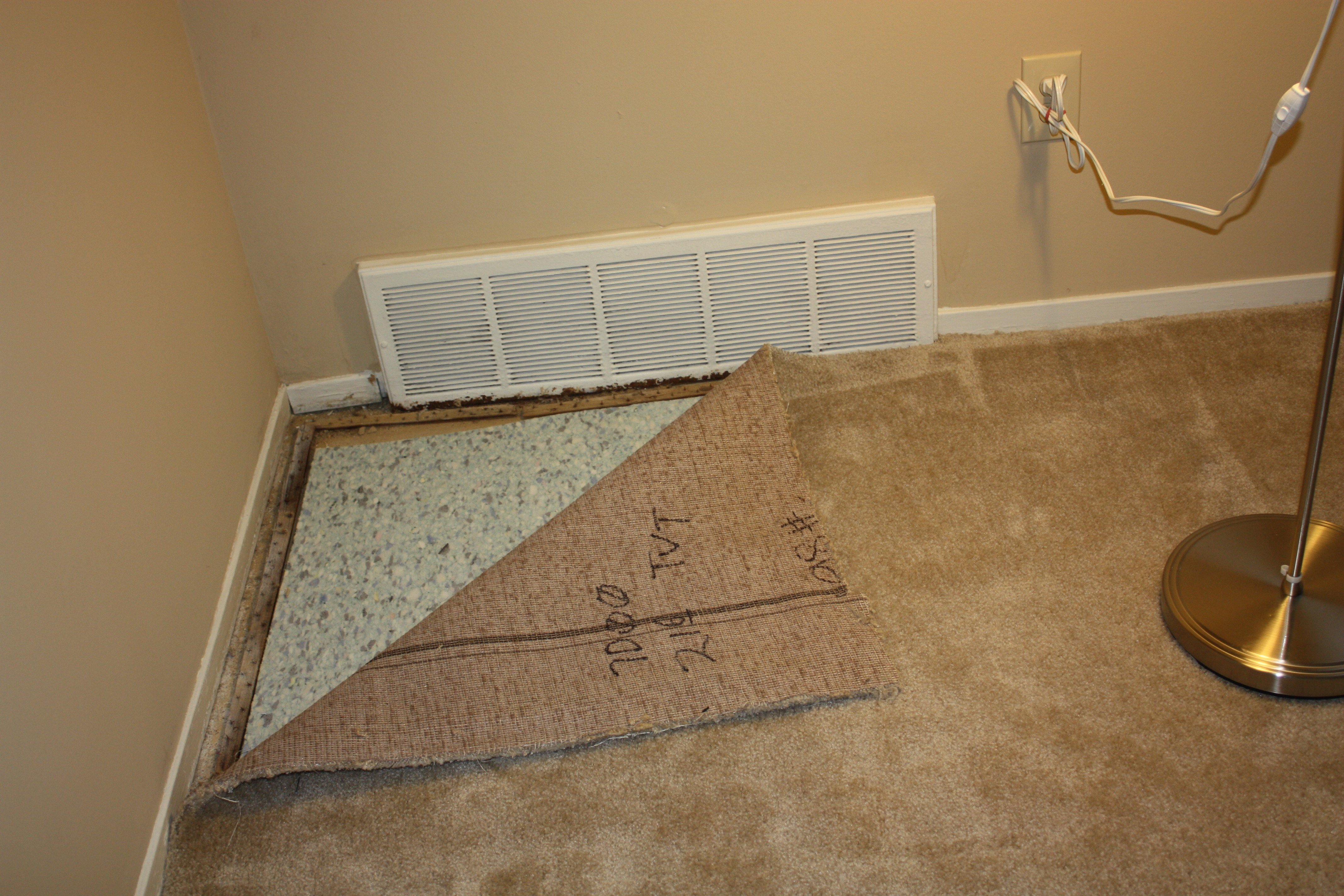 Best Black Mold Cleanlinest™ By Sanit Air With Pictures