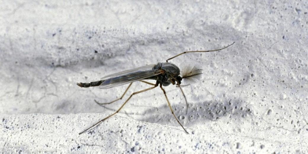 Best Why Are There Gnats In My Bedroom Www Indiepedia Org With Pictures
