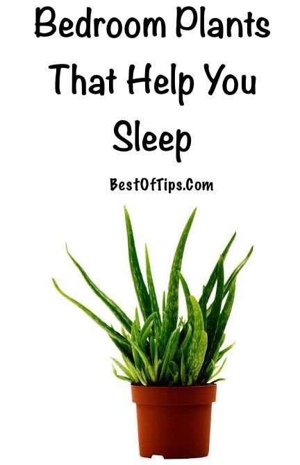 Best Bedroom Plants That Help You Sleep Sleep Plants And With Pictures