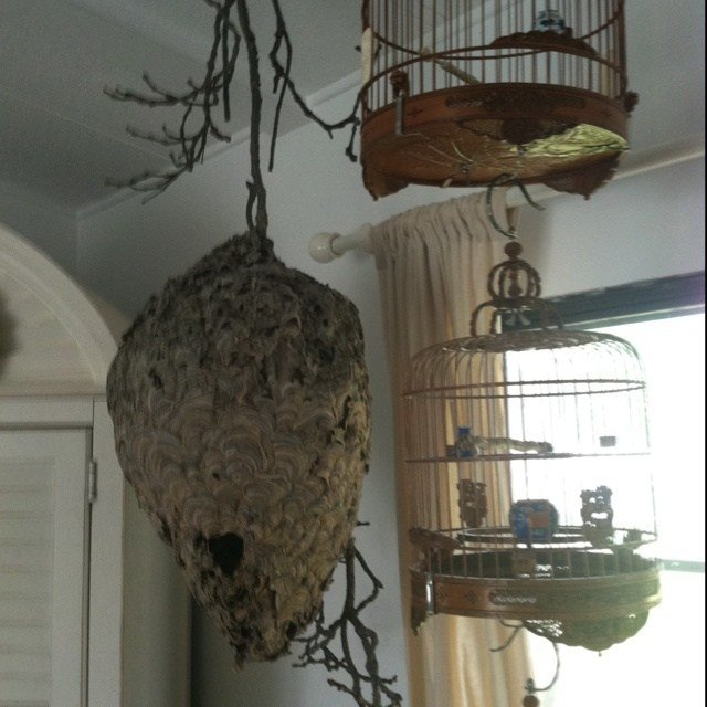 Best Consider A Hornet Nest When Decorating Home Pinterest With Pictures