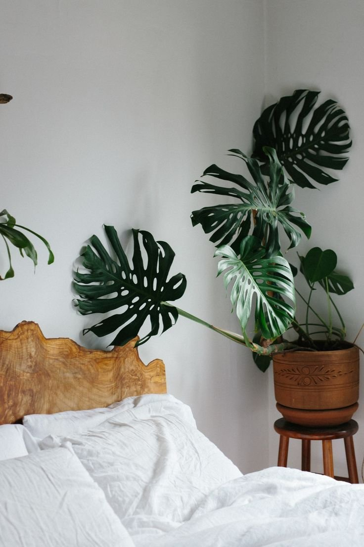 Best 25 Best Ideas About Bedroom Plants On Pinterest Plants With Pictures