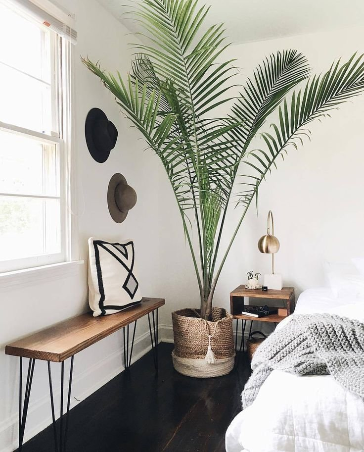 Best 25 Best Ideas About Palm Tree Decorations On Pinterest With Pictures