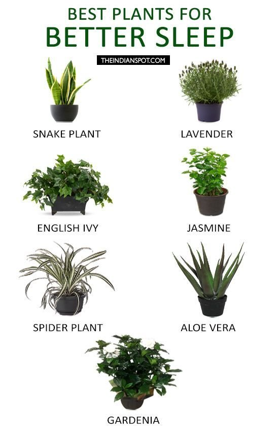 Best Plants To Keep In Your Bedroom To Help You Sleep With Pictures