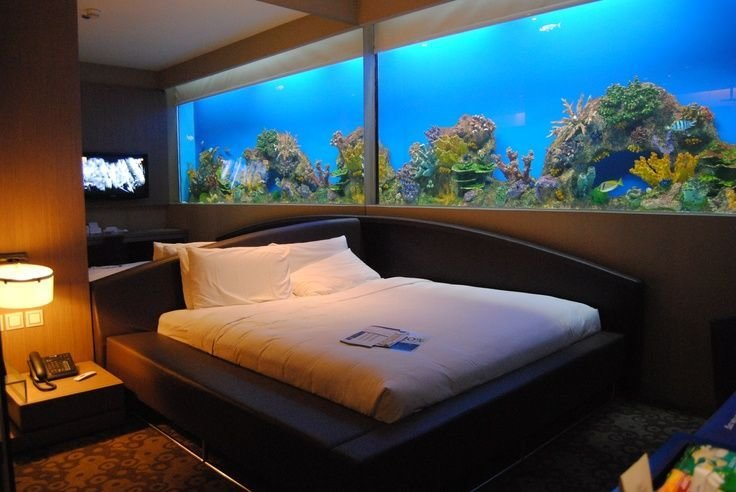 Best 1000 Images About Aquarium Bedroom On Pinterest Dubai Underwater And Atlantis With Pictures