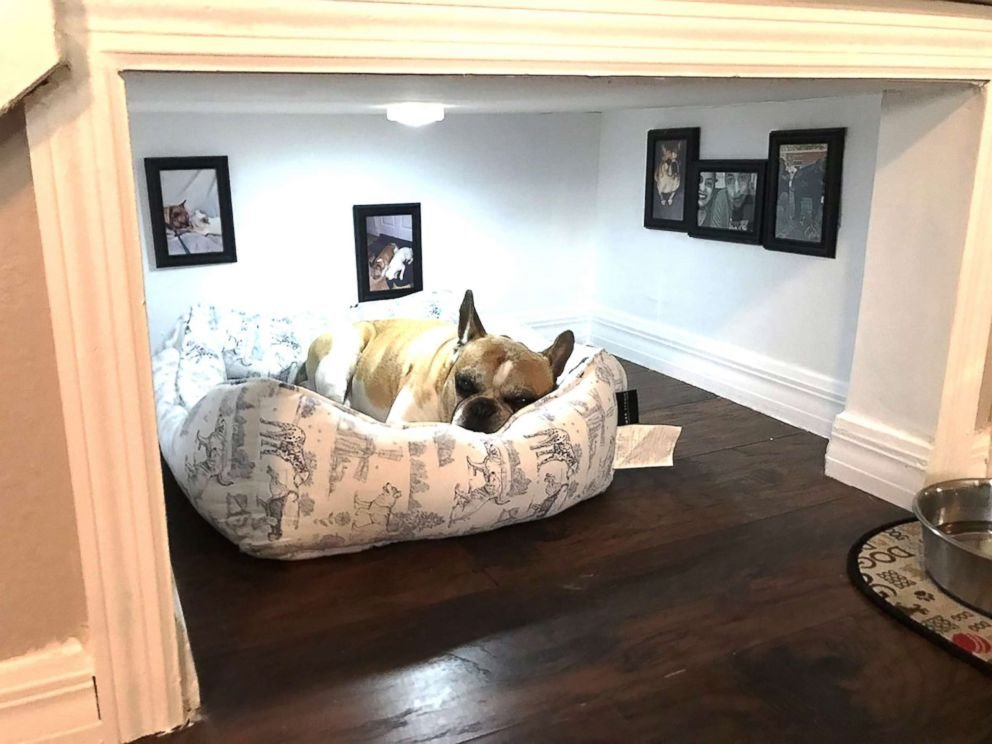 Best Florida Man Builds Tiny Bedroom For His Dog Under The With Pictures