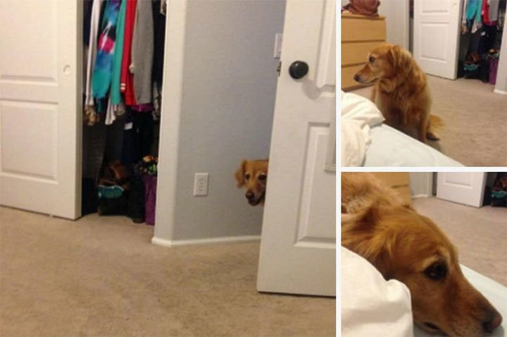 Best 27 Clever Dogs That Aren T Breaking Their Human S Rules With Pictures