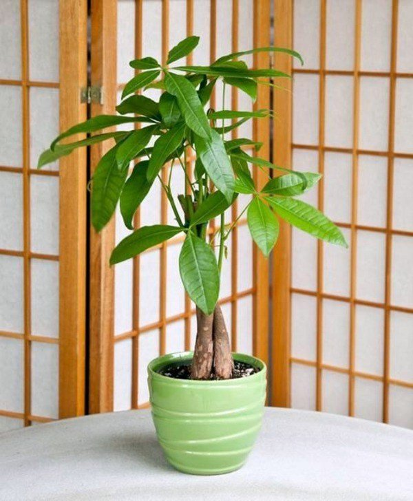 Best Feng Shui Plants For Harmony And Positive Energy In The With Pictures
