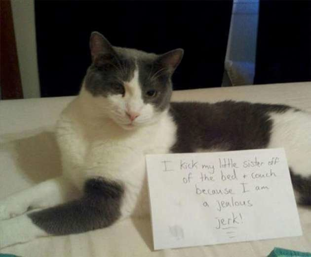 "Best Of ""Cat Shaming"" – 26 Pics With Pictures"