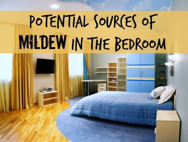 Best Potential Sources For Mildew Odor In A Bedroom With Pictures