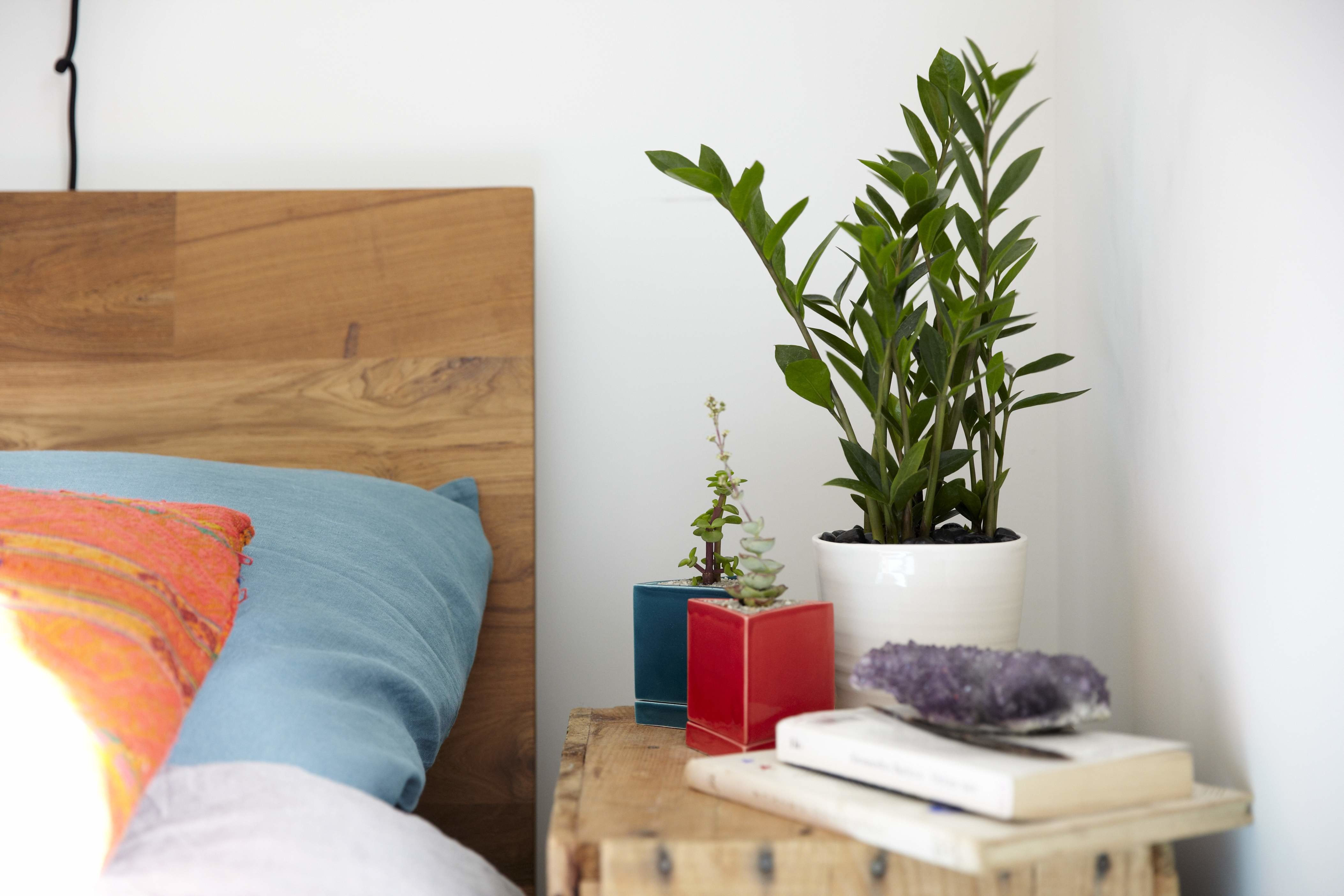 Best Should You Keep Plants In Your Bedroom Casper Blog With Pictures