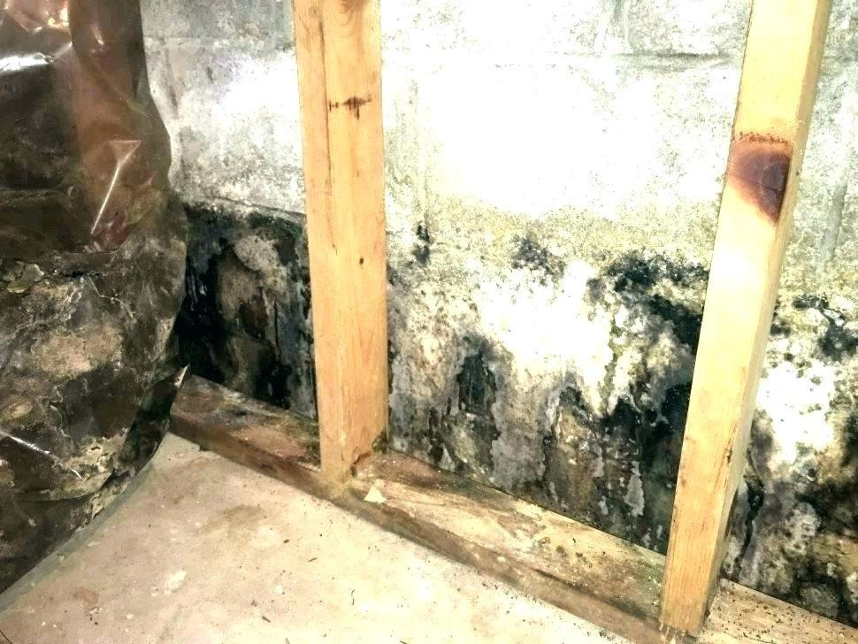 Best Old House Smell Removal Get Rid Musty Odor House Get Rid With Pictures
