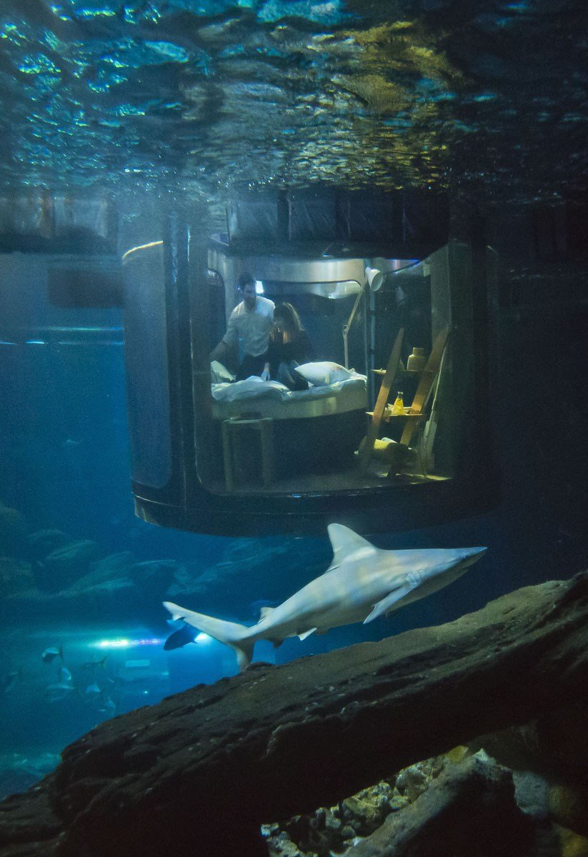Best Paris Aquarium's Underwater Bedroom With Pictures