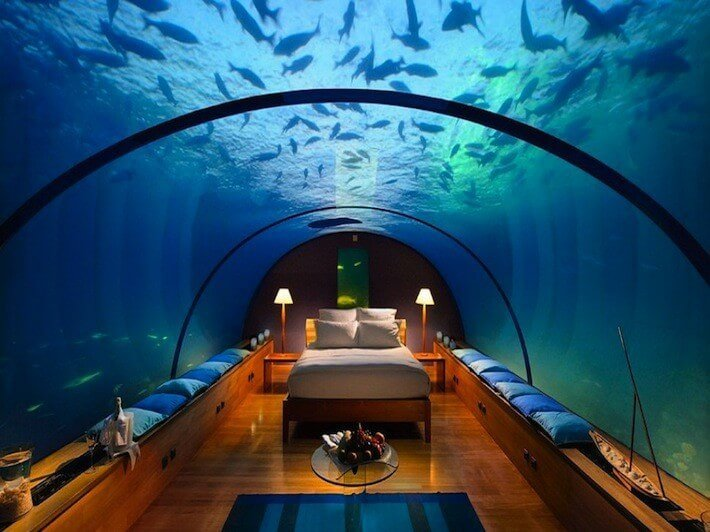 Best Room Of The Day Sleep Amongst The Sealife In This With Pictures