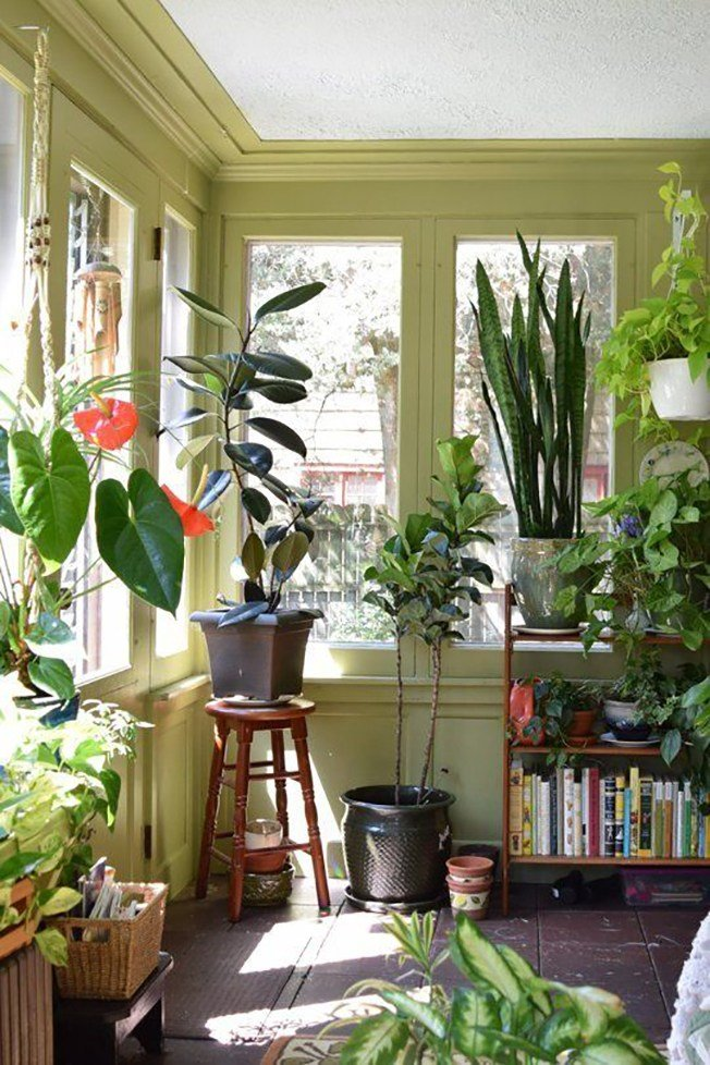 Best Decorating With House Plants I Love Green Inspiration With Pictures