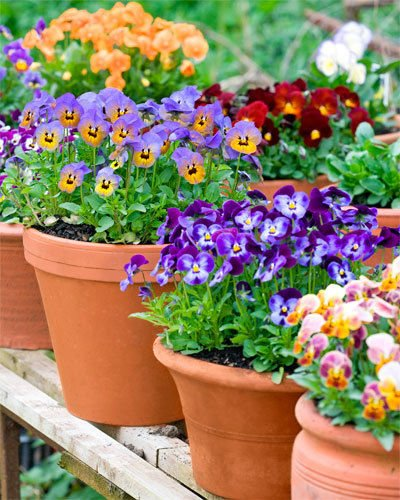Best Creative Ways To Decorate Your Garden With Potted Plants With Pictures