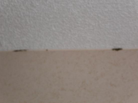 Best Bedroom Ceiling Mold Picture Of Newcastle Hotel With Pictures