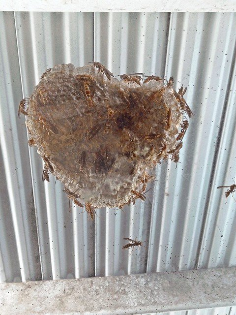 Best Huge Wasp Nest Helped Load Furniture Last Sunday For With Pictures