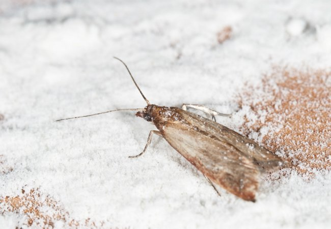 Best How To Get Rid Of Pantry Moths Bob Vila With Pictures