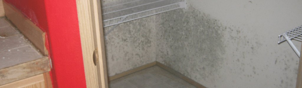 Best Mold Growth That Took Place In Closet Growing And Eating With Pictures