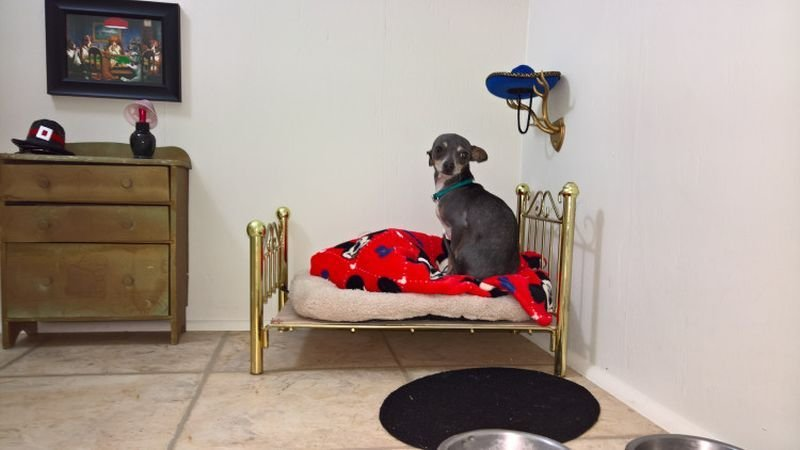 Best Dog House Under Staircase Homecrux With Pictures