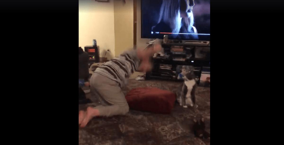 VÍDEO | Así calma un gato a un niño enfermo que sufre un ataque de ansiedad